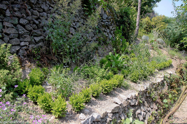 Un jardin pour la vue et la meditation le jardin d 39 eden for Jardin les plantes