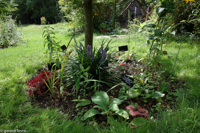 Un jardin de promenade et d 39 artiste en c vennes plantes for De l arbre au meuble